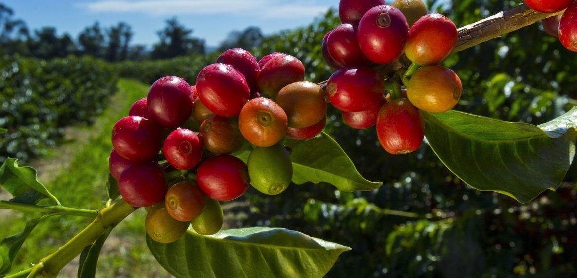 Ceny kawy zmierzają w kierunku pogłębienia ostatnich dołków