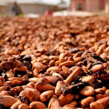 Istotne wydarzenie na rynku kakao. Ropa naftowa kontynuuje wzrosty