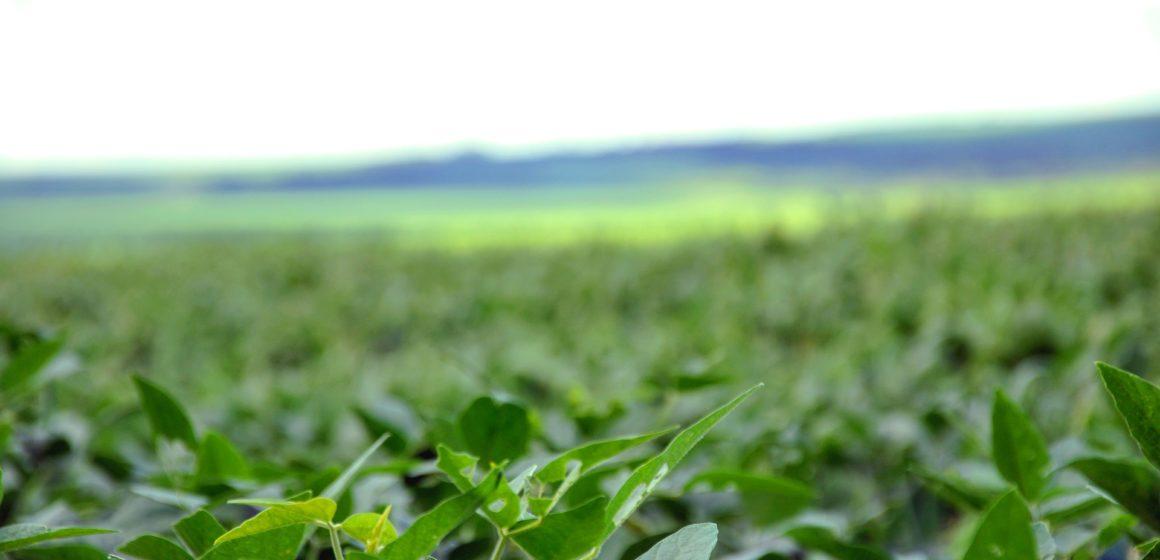 Zwyżka cen miedzi. Cena soi w USA najwyżej od 16 miesięcy